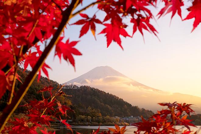 Mùa lá đỏ nhật bản