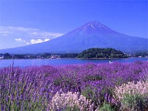 Ngày 04: NAGOYA - NÚI PHÚ SĨ - CÔNG VIÊN OISHI - KAWAGUCHIKO