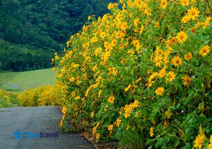 Tour du lịch Đà Lạt mùa hoa dã quỳ 4 ngày khởi hành từ Sài Gòn