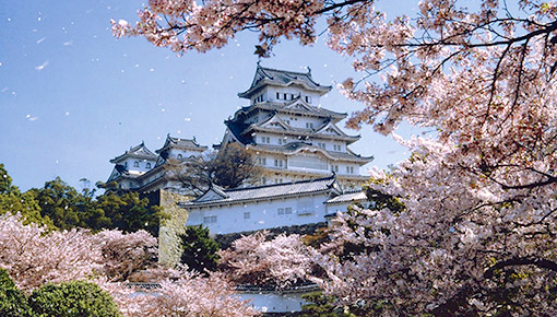 Ngày 04: Kumamoto, Nhật Bản