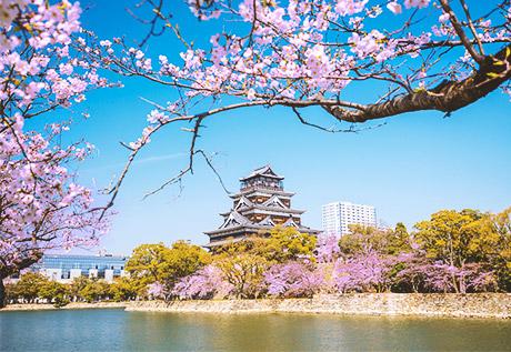 Ngắm sắc Hoa Anh Đào Nhật Bản cùng Du thuyền 5 sao