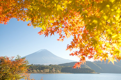 Khám phá hải trình Trung - Nhật: Mùa lá đỏ