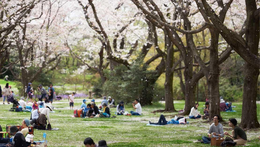 Sakura ! Xúc cảm một mùa hoa