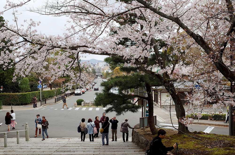 Nếu có thể, hãy đến Nhật Bản một lần