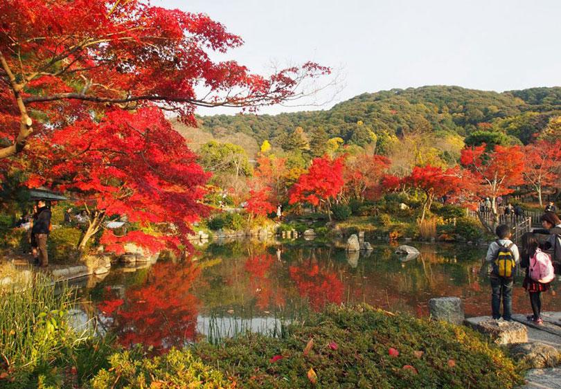 Công viên Maruyama viên ngọc quý của Kyoto, Nhật Bản