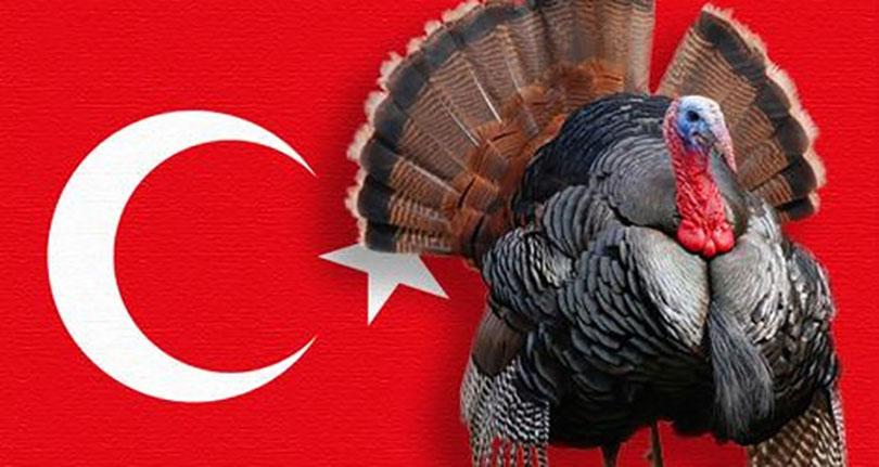 Thổ nhĩ kỳ, gà tây và câu chuyện xung quanh cái tên Turkey nhạy cảm