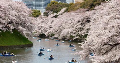 Du ngoạn Nhật Bản bằng du thuyền 5 sao